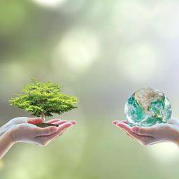 Inovação e Sustentabilidade na Friato